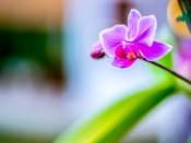 160301_Thai_Raahi_053